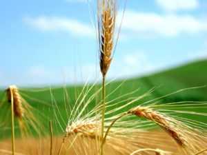 Работающие линии сушки зерна в Вологодской и Ярославской областях