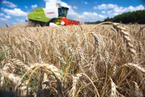 Отменят ли пошлину на экспорт зерна?